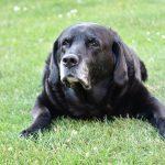 Comment choisir une rampe pour vieux chien pour la voiture ?