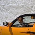 Comment nettoyer une voiture avec plein de poils d'animaux ?